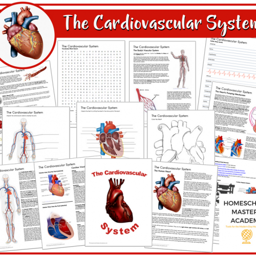 Let's Study The Cardiovascular System Workbook