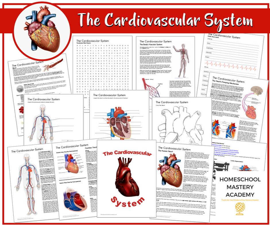 Cardiovascular heart study
