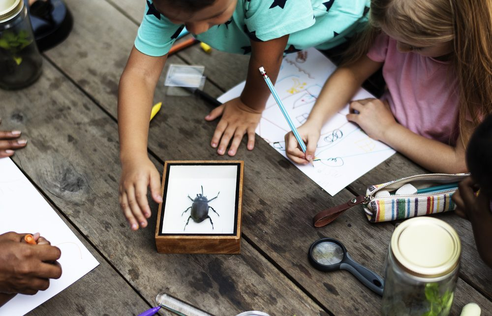 10 Nature Study Resources for Homeschoolers
