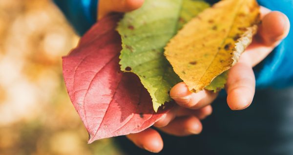 Fall Leaves Autumn Themed Books & Activities for Preschoolers