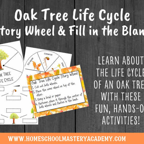 Oak Tree Life Cycle