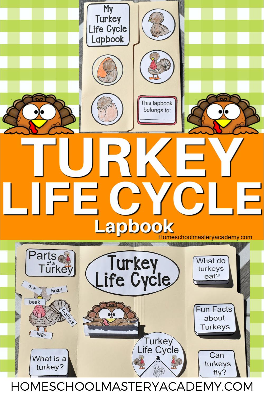 Turkey Life Cycle Lapbook