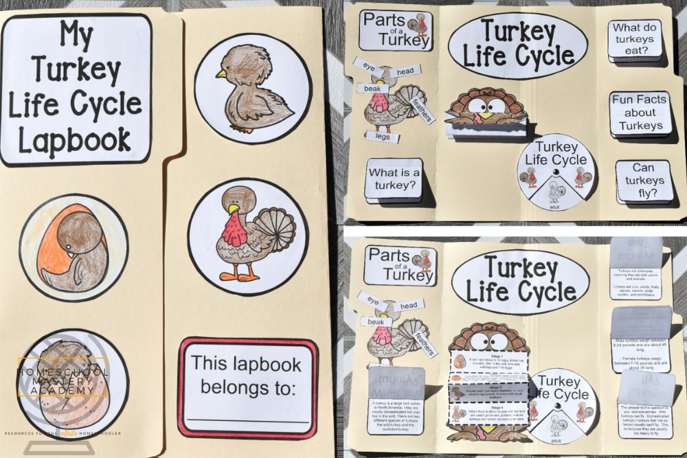 The Life Cycle of a Turkey Lapbook